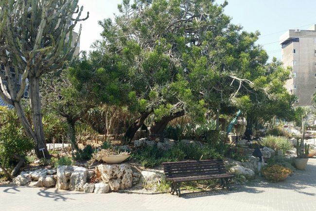 גן הקקטוסים נפתח בשעות אחר הצהריים והערב