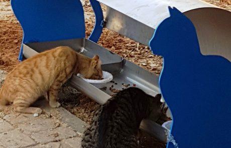 היוזמה של שירלי לביא ציון להאכלת חתולי הרחוב