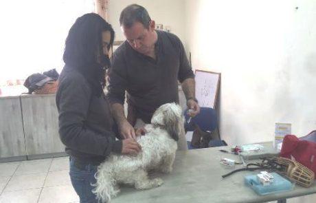 הנגשת חיסוני הכלבת בחולון