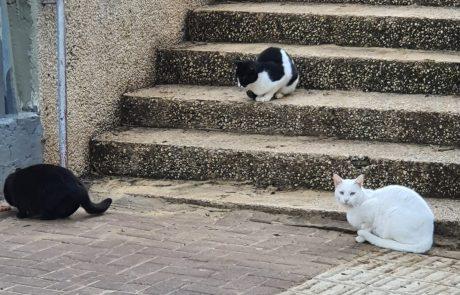 ממה הורעלו החתולים בחולון?