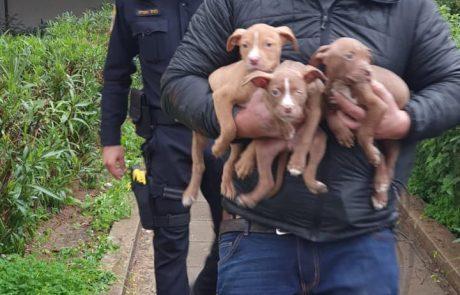 כלבים מסוכנים נתפסו תחת הזנחה במקלט